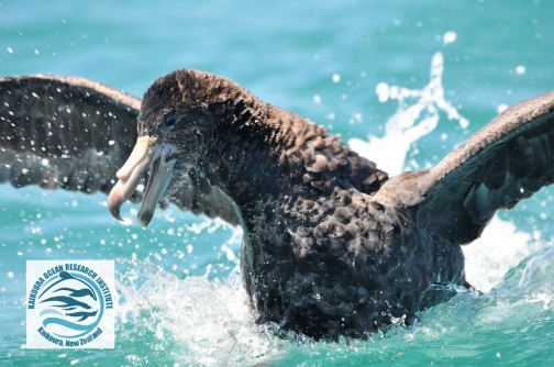 giant petrel watermarked.jpg