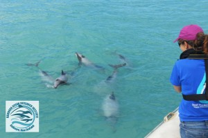KORI director Jody Weir looking at a pod of six Hector's dolphins from the research zodiac.