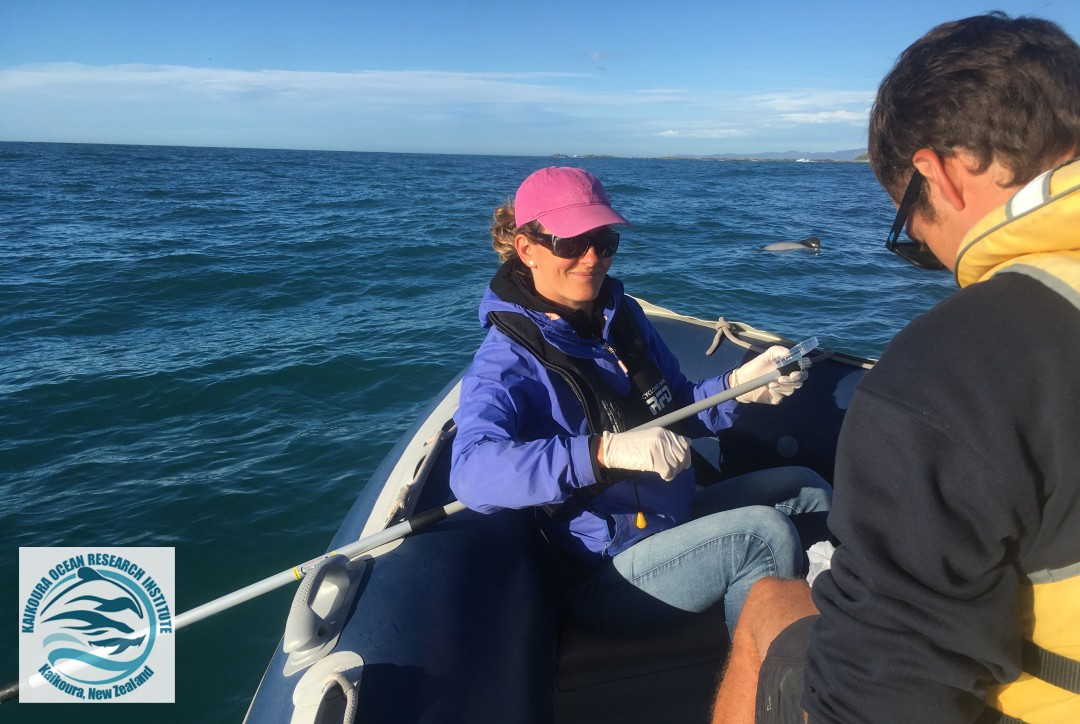 KORI director Jody Weir sitting in the front of the research zodiac with equipment for blow sampling on Hector's dolphins.